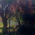 Photo de Foxglove Inn and Gardens
