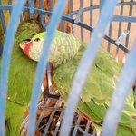 Birds at hotel