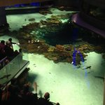 New black tip reef exhibit