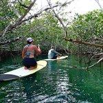 Key West - Mangroves