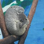 Koala momma and baby