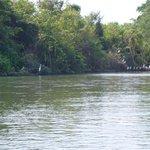 Birds along the river bank