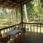 private balcony - coconut grooves - paddy fields