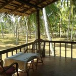 180* panaromic view of the paddy fields, coconut groove and the sea  staying at earth 9