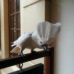 Friendly cockatoo