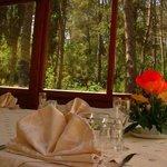 Vista sulla foresta...relax!!!