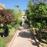 path thru citrus trees to room