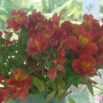 Beautiful flowers on the breakfast table every day