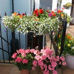 The Flower tubs in Summer.