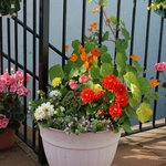 The Flower tubs in Summer