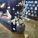 Pianta di cotone allo store