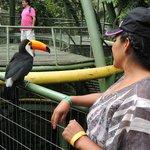 Bird cage area