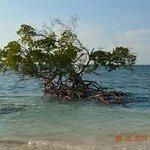 mangrovia