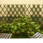 """Geraniums and """"garden"""" outside of room"""