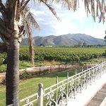 surrounding vines