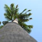 пальма в отеле