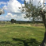 short course with olive trees
