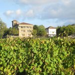 Grapevines in foreground, hotel in background