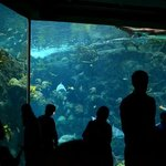 Tampa aquarium