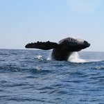 Eco Adventures Cabo Pulmo Whale Watching trip