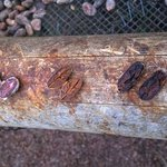 Cacao beans in various stages of fermentation