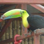 A Beak Repair