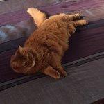 Beautiful, resident Cat Baija.