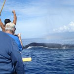 Whale ho