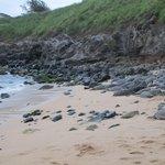 Many Sea Turtles