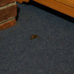 Leech crawling in our room!