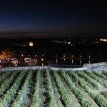 Ile de la Barthelasse vue de nuit et du Rocher des Doms