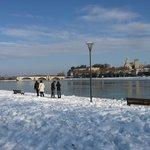 La Barthelasse sous la neige le 10 Janvier 2010