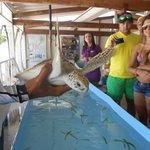 Fundación para proteger las tortugas