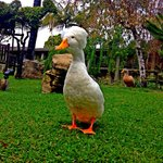 Mother Goose actually walks around the grounds. Very nice lagoon and grounds.