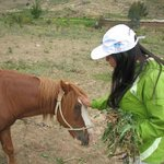Pony en la Granja