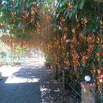 amazing flowering vine