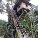"""The tree house """"complex"""""""