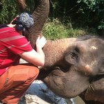 Just hugging an elephant, WHAT??