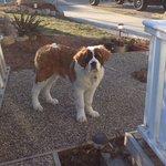 Above the Inlet B & B - Sechelt, BC (Sunshine Coast) - My dog Beethoven
