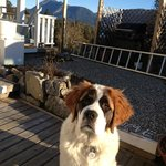 Above the Inlet B & B - Sechelt, BC (Sunshine Coast) - my dog Beethoven