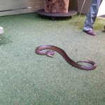 Grumpy Frankie the snake.