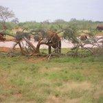 elefante incagliato