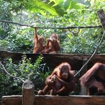 Breakfast with the Orang-utans