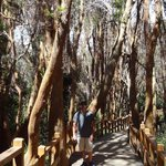 Arrayanes Forest