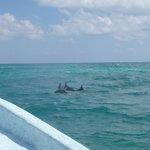 3 dauphins