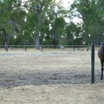 Horse and Friends sharing a late summer, late evening paddock.