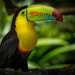 A Toucan from the Wildlife Preserve