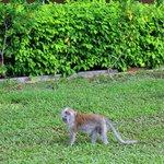 обезьянки на территории отеля