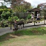 Emu and Wallaby enclosure