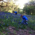 Bluebell Picking May 2013